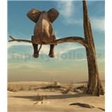 Vliesové fototapety slon na strome rozmer 184 cm x 254 cm
