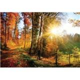 Vliesové fototapety slnko a les rozmer 368 cm x 254 cm