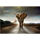 Vliesové fototapety kráčajúci slon rozmer 368 cm x 254 cm