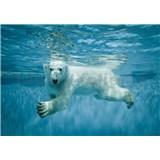 Vliesové fototapety ľadový medveď vo vodě rozmer 368 cm x 254 cm