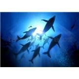 Vliesové fototapety potápač s veľrybami rozmer 368 cm x 254 cm