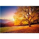 Vliesové fototapety jesenný strom rozmer 368 cm x 254 cm