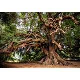 Vliesové fototapety dlhoročný olivovník rozmer 368 cm x 254 cm