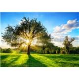 Vliesové fototapety svit slnka v korune stromu rozmer 368 cm x 254 cm