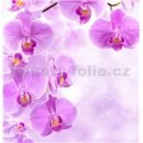 Vliesové fototapety vetva fialové orchidey, rozmer 312 x 219 cm