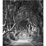 Vliesové fototapety Hefele cestička so stromoradím, rozmer 250 cm x 280 cm
