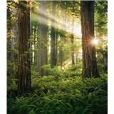 Vliesové fototapety Hefele les škriatkov, rozmer 250 cm x 280 cm