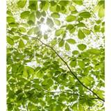 Vliesové fototapety Hefele les na jar, rozmer 250 cm x 280 cm