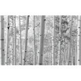 Vliesové fototapety Hefele brezy, rozmer 450 cm x 280 cm