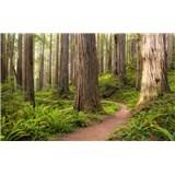 Vliesové fototapety Hefele červený chodník v lese, rozmer 450 cm x 280 cm