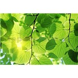 Vliesové fototapety zelené listia rozmer 375 cm x 250 cm