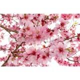 Vliesové fototapety jabloňové kvety rozmer 375 cm x 250 cm