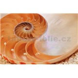 Fototapeta National Geographic Nautilus, rozmer 184 x 127 cm