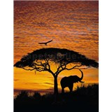 Fototapeta Afrika, rozmer 194 x 270 cm