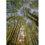 Fototapety koruny stromov, rozmer 184 x 254 cm
