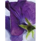 Fototapeta Viola, rozmer 184 x 254 cm