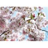 Fototapeta National Geographic Spring, rozmer 368 x 254 cm