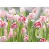 Fototapeta ružové tulipány, rozmer 368 x 254 cm