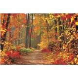 Fototapety les na jeseň