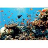 Fototapety koralový útes, rozmer 368 cm x 254 cm