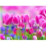 Vliesové fototapety tulipány rozmer 312 cm x 219 cm