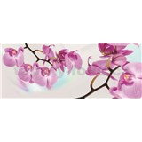 Vliesové fototapety orchidea