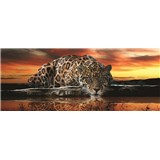 Vliesové fototapety jaguár, rozmer 250 cm x 104 cm