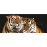 Vliesové fototapety tiger, rozmer 250 x 104 cm