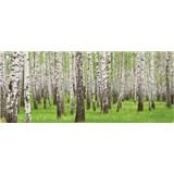 Vliesové fototapety brezy