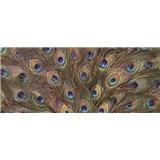 Vliesové fototapety pávie perie