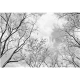 Fototapety vrcholky stromov rozmer 366 cm x 254 cm - POSLEDNÉ KUSY