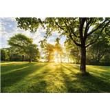 Fototapety svitanie v parku rozmer 368 cm x 254 cm