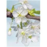 Vliesové fototapety kvety čerešní rozmer 184 cm x 248 cm