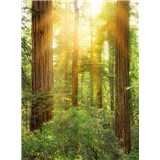 Vliesové fototapety les rozmer 184 cm x 248 cm