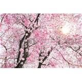 Vliesové fototapety rozkvitnutý strom rozmer 368 cm x 248 cm