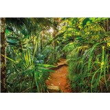 Fototapety Jungle Trail, rozmer 368 x 254 cm
