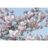 Fototapety magnolie, rozmer 368 x 254 cm