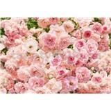 Fototapety ruže, rozmer 368 x 254 cm