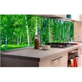 Samolepiace tapety za kuchynskú linku brezový les rozmer 180 cm x 60 cm