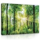 Obraz na stenu slnečné lúče medzi stromami 152 x 98 cm