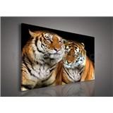 Obraz na stenu tigre 100 x 75 cm