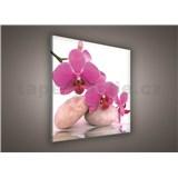 Obraz na stenu orchidea ružová 80 x 80 cm