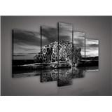 Obraz na plátne Jaguár čiernobiely 170 x 100 cm