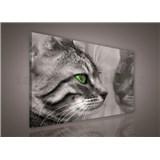 Obraz na stenu mačka 75 x 100 cm