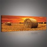 Obraz na stenu západ slnka nad poľom 145 x 45 cm