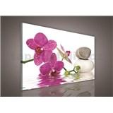 Obraz na stenu orchidea 75 x 100 cm