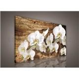 Obraz na stenu biela orchidea na dreve 75 x 100 cm