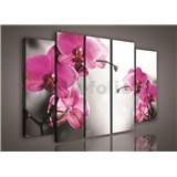 Obraz na plátne orchidea 150 x 100 cm