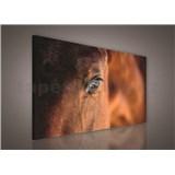 Obraz na stenu kôň 75 x 100 cm