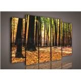 Obraz na plátne jesenné les 150 x 100 cm